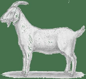 Chèvre Elevage et Vente Agneau Ferme pédagogique Gaec du Caire Chaillolet St Michel de Chaillol Champsaur Valgaudemar Hautes Alpes